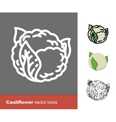 Cauliflower icons vector