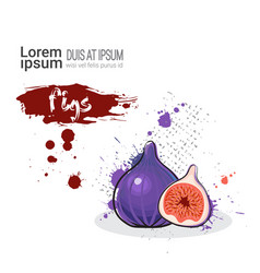fig hand drawn watercolor fruit on white vector image