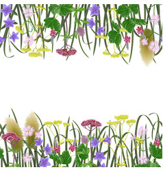 seamless border with seven herbs vector image