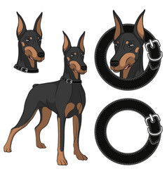 Set of doberman colored in a collar vector