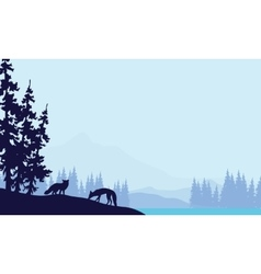 Blue backgrounds fox silhouettes vector image vector image