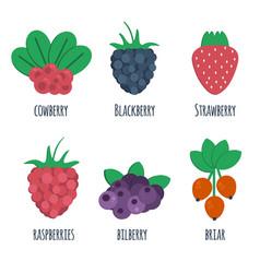 berris vector image