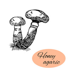 honey agaric ink drawing vector image