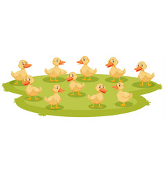 Lotd baby ducklings on ground vector