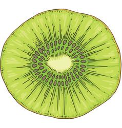 ripe kiwi fruit slice vector image