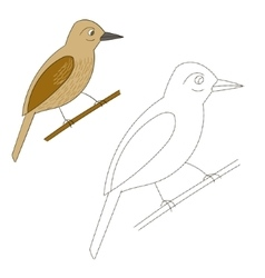 Connect the dots game xenops bird vector image
