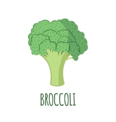 Broccoli icon in flat style on white background vector image vector image
