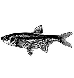 Fish spirlin vector