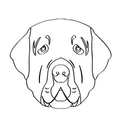 isolated golden retriever avatar vector image vector image
