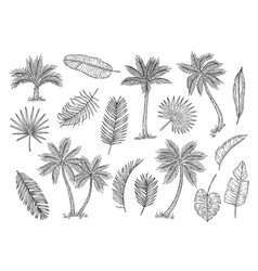 sketch palm tree tropical rain forest trees and vector image