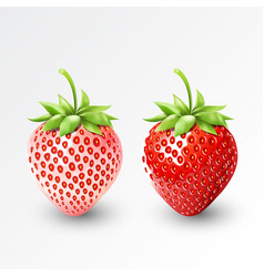 strawberry and white strawberry pineberry fruit vector image