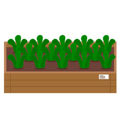 Vegetable garden flat plants vector
