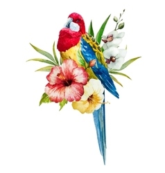 Watercolor rosella bird vector image