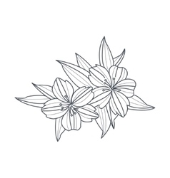 Wild Flower Monochrome Drawing For Coloring Book vector image vector image