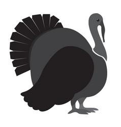 isolated turkey icon vector image