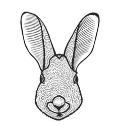 Portrait of rabbit vector