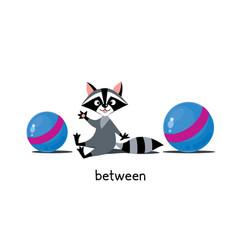 Preposition place raccoon between two balls vector