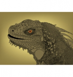 iguana head vector image vector image
