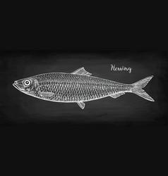 Chalk sketch herring vector