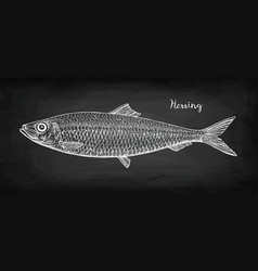 Chalk sketch of herring vector