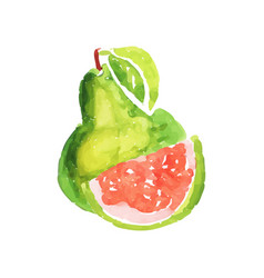 Juicy ripe guava fruit watercolor hand painting vector