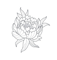 Peony Flower Monochrome Drawing For Coloring Book vector image vector image