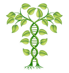 Dna plant concept vector