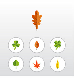 Flat icon foliage set of aspen hickory maple and vector