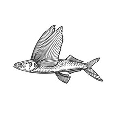 flying fish engraving vector image