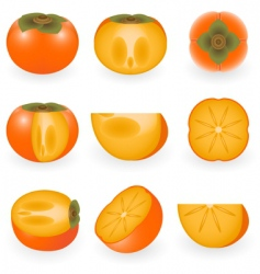 persimmon vector image