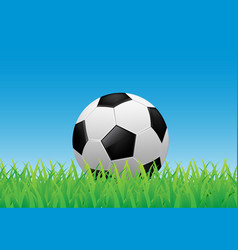soccer ball on green grass vector image