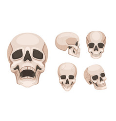 human skull at different sides monochrome vector image vector image