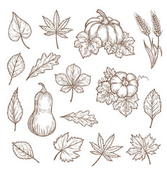 autumn leaves and pumpkins sketch icons vector image