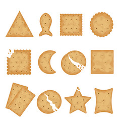 crunchy cracker cookies flat vector image