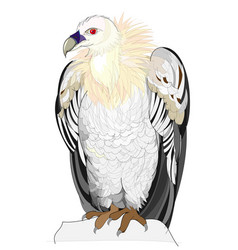 Fantasy cute vulture on white background vector