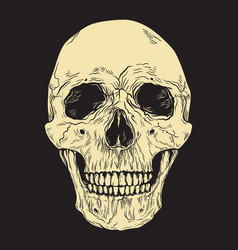 human skull on black background hand drawn vector image