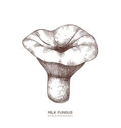 Milk fungus hand drawn edible mushroom vector