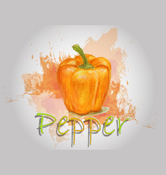 pepper watercolor food vector image