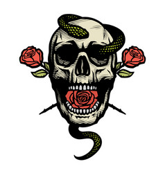 skull with a snake and roses vector image