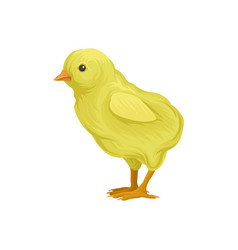 ute little yellow chick poultry breeding vector image