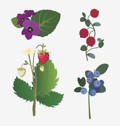 Wild berries and flowers vector