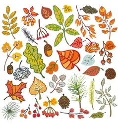 Autumn leavesberriespine branchesconesFall vector image