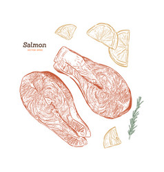 salmon steak hand drawn rosemary vector image