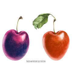 Two fresh plums vector