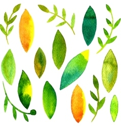 watercolor green leaves and branches vector image