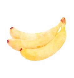 watercolor banana fruit on white vector image