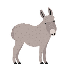 Amusing grey donkey ass or burro isolated on vector