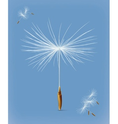 Dandelion seeds icon vector image