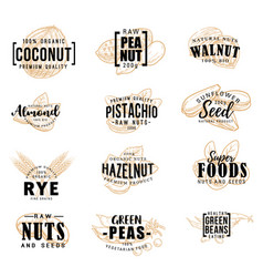 nuts and fruit seeds sketch lettering vector image
