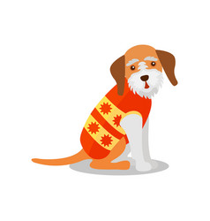 Pedigree terrier dog in a bright vest cute puppy vector
